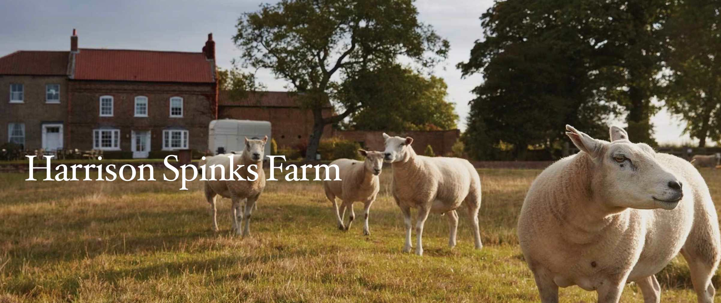 Image of Harrison Spinks Farm with the prize sheep standing in a field